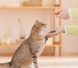 Training using positive reinforcement