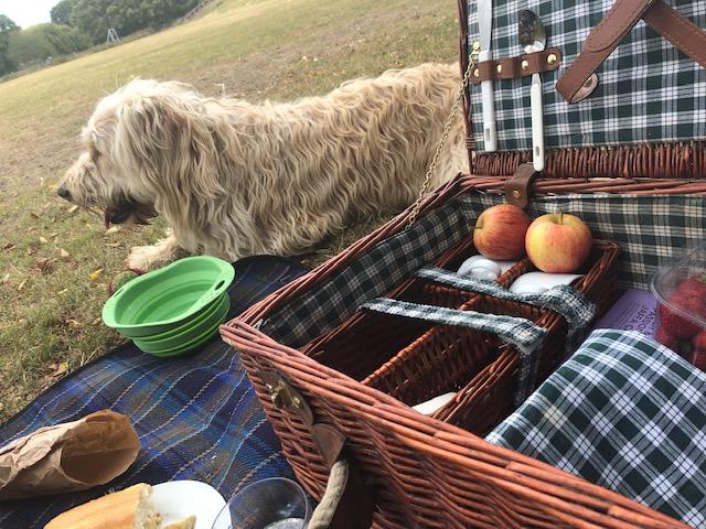 Banish dread of picnics with a Peaceful Picnic workshop