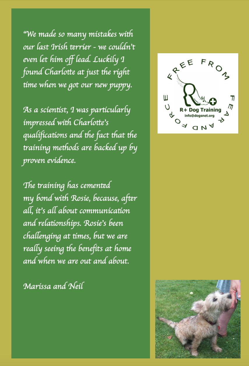 R+ Dog Training Rosie Irish Terrier story