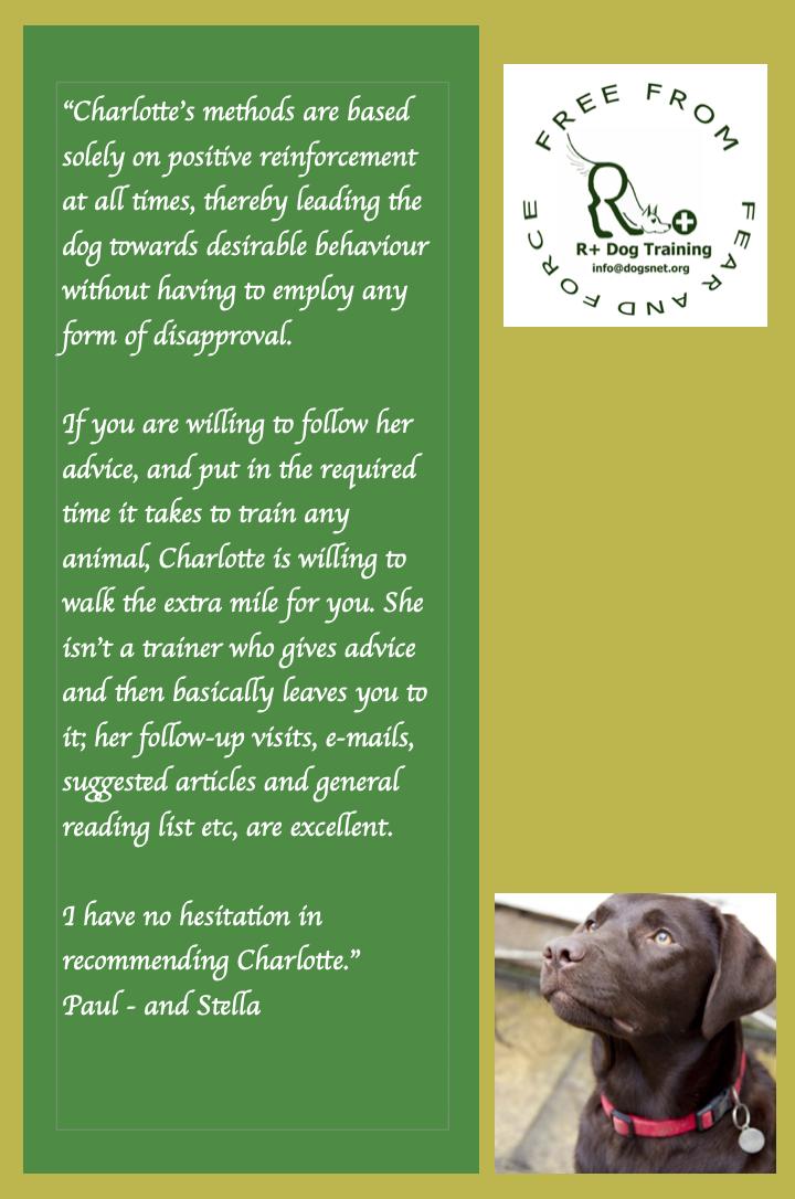 R+ Dog Training Testimonial - Stella