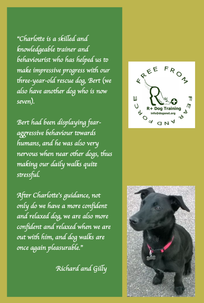 Rescue Dog R+ Dog Training Testimonial