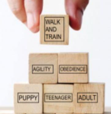 R+ Dog Training Options - buildings blocks