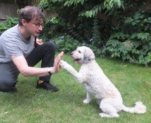 "R+ Dog Training teaches a dog to ""high five"""