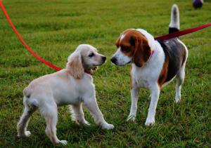 Monthly social dog walks