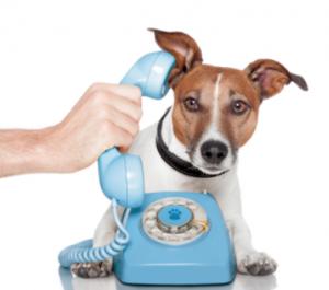 Contact R+ Dog Training